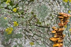 La struttura della corteccia di albero Alberi della Russia centrale Fotografia Stock Libera da Diritti