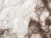 La struttura della spiaggia di sabbia con il piede stampa ed il pino va principalmente sopra Immagini Stock