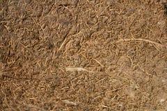 La struttura delle fibre di noce di cocco con ad alta definizione Fotografie Stock