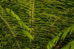 La struttura delle foglie verdi Fotografie Stock