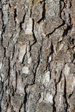 La struttura di legno naturale Fotografia Stock Libera da Diritti