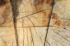 La struttura di di melo è ridotta - una sezione trasversale del tronco con gli anelli annuali e le crepe fotografia stock