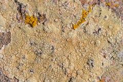 La struttura di superficie sulla pietra del mare Crescite incrinate a secco sulla t fotografia stock