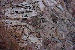 La struttura di una pietra ha premuto dalle coperture Immagine Stock