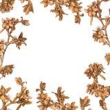 La struttura floreale fatta di sakura dorato si ramifica su fondo bianco Fotografia Stock Libera da Diritti