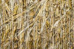 La struttura naturale del primo piano del modello della balla della paglia della superficie del grano del grano dei cereali ha ro Fotografie Stock