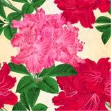 La struttura senza cuciture fiorisce l'illustrazione d'annata rossa e rosa di vettore dello sfondo naturale dei ramoscelli dei ro royalty illustrazione gratis