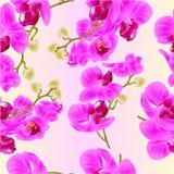 La struttura senza cuciture si ramifica phalaenopsis della pianta tropicale dei fiori di porpora delle orchidee su un illu botani Fotografia Stock Libera da Diritti