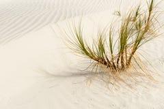 La stupéfaction Mangawhai dirige des dunes de sable Photos libres de droits