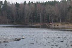 La Suède - 1er avril 2017 : Loge dans la région sauvage de la Suède Photo stock