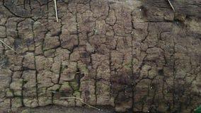 La superficie del legno è detriti ed asciuga indurre la superficie a fendersi immagini stock libere da diritti