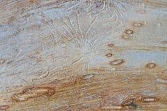 La superficie del legno Fotografia Stock Libera da Diritti