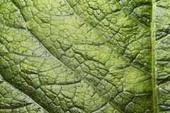 La superficie della foglia verde Immagini Stock Libere da Diritti