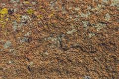 La superficie di pietra coperta di muschio e di lichene Immagini Stock Libere da Diritti