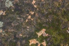 La superficie di pietra coperta di muschio e di lichene Immagine Stock Libera da Diritti