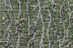La superficie modellata dell'albero è ancora viva Fotografia Stock Libera da Diritti