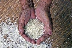 La supervivencia con arroz, Foto de archivo