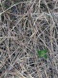 La supervivencia de malas hierbas Foto de archivo libre de regalías