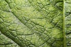 La surface de la feuille verte Images libres de droits