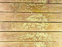 La surface du plancher en bois dur a traité avec un scelleur fongicide et insecticide image libre de droits