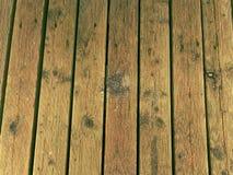 La surface du plancher en bois dur a traité avec un scelleur fongicide et insecticide image stock