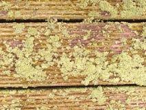 La surface du plancher en bois dur a traité avec un scelleur fongicide et insecticide photo libre de droits