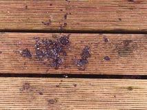La surface du plancher en bois dur a traité avec un scelleur fongicide et insecticide photos stock