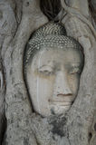 La tête Buddha Photo libre de droits