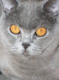 La tête d'un chat Photos libres de droits