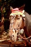 La tête d'un cheval rouge avec les enfants de attente d'un chapeau rouge à marcher autour photo libre de droits