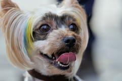 La tête d'un chien Photo libre de droits