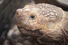 La tête d'une tortue photographie stock libre de droits