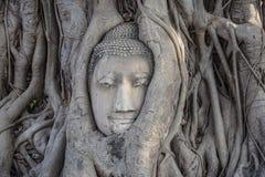 La tête de Bouddha Photos libres de droits