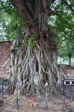 La tête de Bouddha célèbre Photographie stock libre de droits