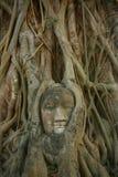 La tête de Bouddha dans des racines d'arbre Photographie stock