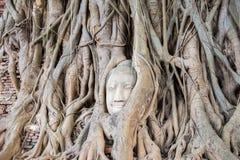 La tête de Bouddha dans l'arbre Images libres de droits