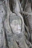 La tête de Bouddha dans les fonds Photo libre de droits