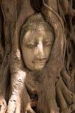La tête de Bouddha entourée par l'arbre s'enracine en Thaïlande Photos libres de droits