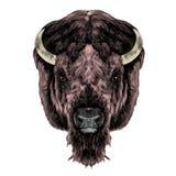 La tête de Buffalo Photographie stock