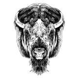 La tête de Buffalo Photos libres de droits
