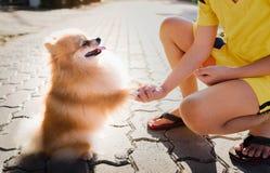 La tête de chien émouvante de main avec amour Image libre de droits