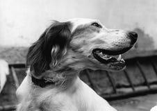 La tête de chien dans le premier plan Photo libre de droits