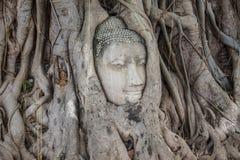 La tête de la statue de Bouddha dans l'arbre s'enracine Image stock