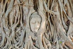 La tête de la statue de Bouddha dans l'arbre s'enracine au temple de Wat Mahathat, image libre de droits