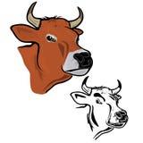 La tête de la vache Photos libres de droits