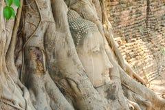 La tête de la statue antique de prêtre dans l'arbre photo stock