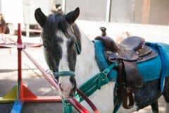 La tête de vue de côté a tiré d'un poney blanc et gris prêt Image libre de droits