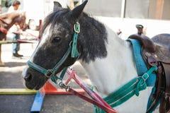 La tête de vue de côté a tiré d'un poney prêt pour la monte Photographie stock libre de droits