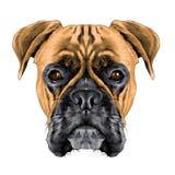 la tête du collier de chien de boxeur de race de chien illustration de vecteur