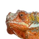 La tête du dragon Photos stock
